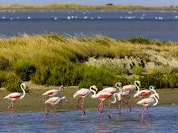 Le parc naturel de Camargue